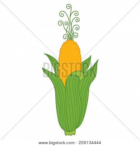 Vector yellow corn with gold grains in green cob. Vector vegetable. Corn vector illustration