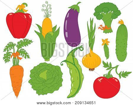 Vector vegetables set. Set includes carrot, cabbage, tomato, onion, cucumber, carrot, peas, corn, eggplant, pepper, broccoli, peas and cabbage. Vector veggies. Vegetables vector illustration