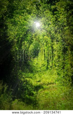 the tunnel of love from Caransebes vegetation grown on railway
