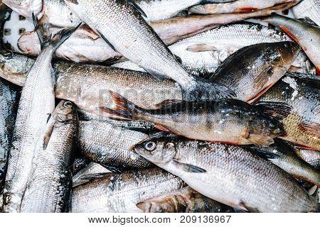 Heap of fresh river fish (perch pike whitefish)