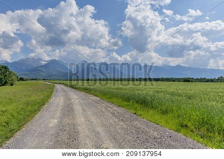 Dirt road near green wheat or barley field in early summer. Driving through mountains on dirt road near a farm. Country road, grain,Carphatian mountains and blue sky.