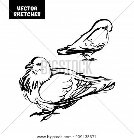 Vector set of design elements. Sketches in ink, doves