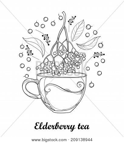 Vector cup of Sambucus nigra or black elder or elderberry tea, outline bunch, berry and leaves isolated on white background. Elderberry drawing in contour style for autumn design and coloring book.