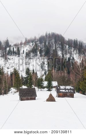Fir-trees and peasant houses on the snow covered mountains Carpathians Ukraine