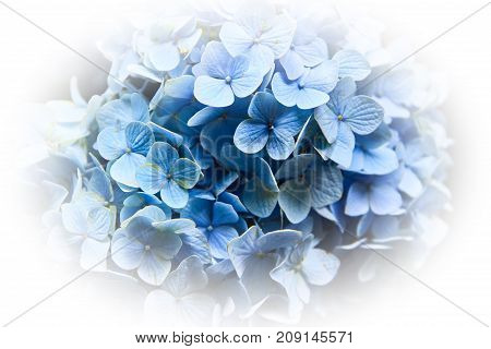 Close up of blue flowers with a white vignette.