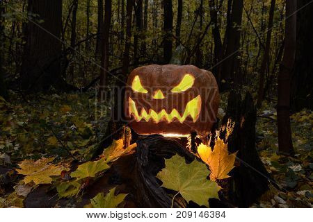 Halloween pumpkin lantern with a terrible face in a dark forest on a stump