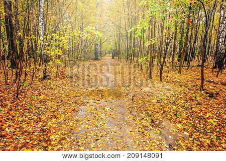 Path in the autumn forest at sunny day time.