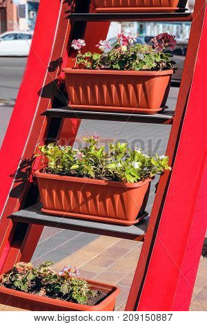 Street red multi-tiered flower garden with plants in pots