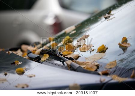colored autumn leafs fallen from tree on the car.