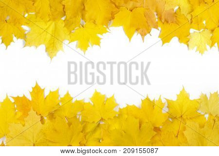 Yellow maple leaves frame with copy space isolated on white background