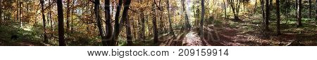 beautiful autumn forest panorma with dog and sun shining