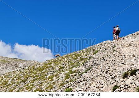 Meeting with mountain chamois on the way to the summit of Olympus.