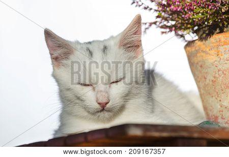 Small White Cat Sleeping Beside Plant