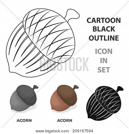 An acorn with a hat.Different kinds of nuts single icon in cartoon style vector symbol stock web illustration.
