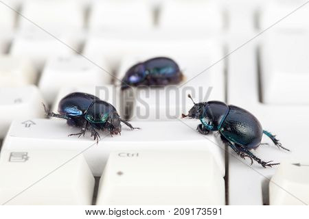 Bugs, computer, virus, malicious keyboard. Security concept.