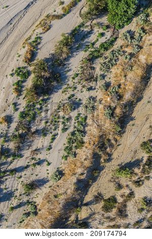 Desert Trees From Above