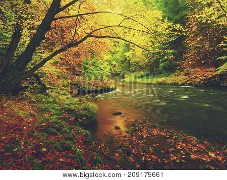 Dreamy Sunset Above Mountain In Autumn Forest. Colorful Mist Between Trees On River Banks