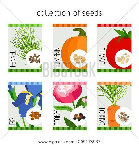 Seeds collection in package. Tomato and fennel, pumpkin and iris, peony and carrot seeds for garden. Vector illustration