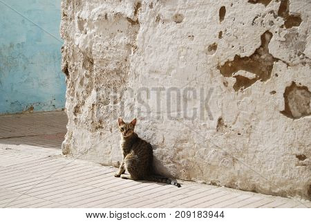 Moroccan cat sitting on a street of medina in front of the grunge wall