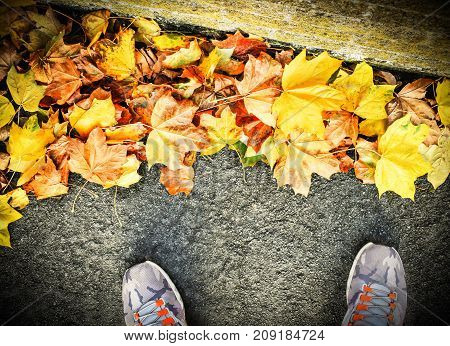 Autumn Image - Study of Fallen Leaves Scattered on the Path with Sneakers