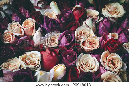 Romantic vintage bouquet of roses as a background.