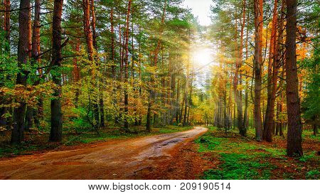 Scenery autumn forest on bright sunny day. Road in colorful woodland. Sunbeams in autumn forest