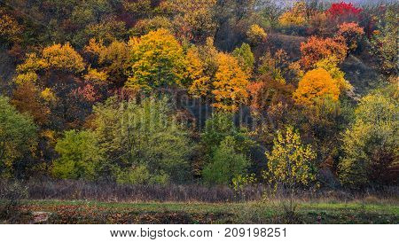 Autumn colors of Europe. View on nature with trees and grass.