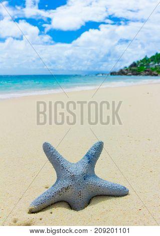 Sand Stars Scene
