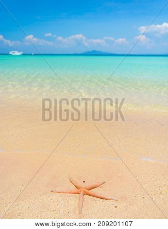 Fallen Star Starfish called Wanda