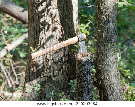 After chopping down a small tree the worker leaves his tomahawk in the tree trunk for a time of resting.