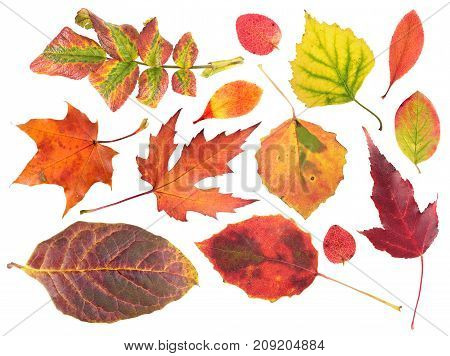 Set of different bright autumn leaves isolated on white background