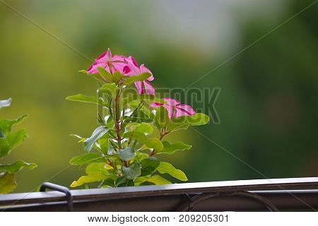 Small flower on an urban balcony