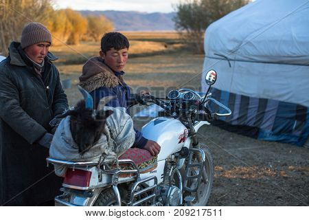 BAYAN-OLGII, MONGOLIA - SEP 27, 2017: Local Kazakhs loaded and tie goat on a motorcycle before slaughter. In Bayan-Olgii Province is populated mainly by Kazakhs (88,7%)