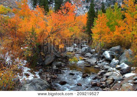 Stream flowing through autumn trees in wild Sierra mountains