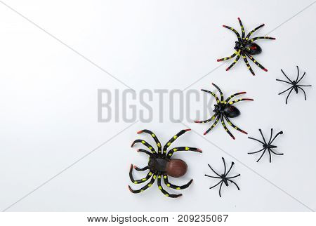 Halloween holiday concept group of spider walk on spider web on white background. Ready for product display montage.
