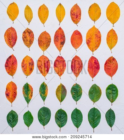 Set of autumn leaves on a white background. A collection of live brown yellow leaves. Plants of green orange on white background. Autumn foliage from a tree October. Sick leaves to point of worms.