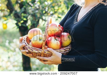 A lovely blonde girl is holding a basket of fresh and ripe apples. Close-up