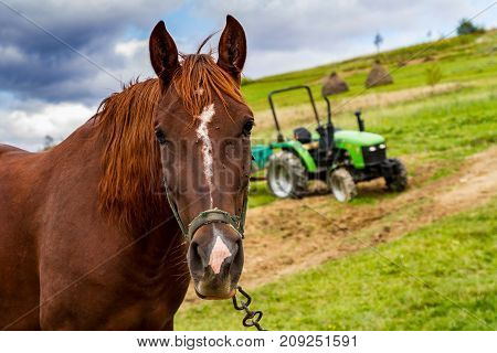 The horse grazes on a mountain meadow near a mini tractor on a cloudy day. Mountain agricultural landscape.