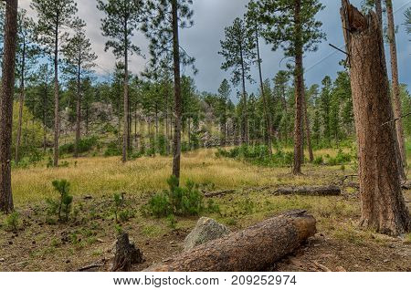 Custer State Park in the Black Hills of South Dakota