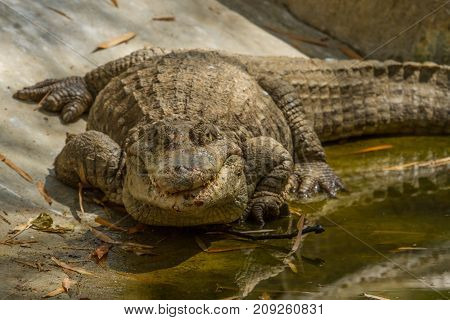photo of a large crocodile basking in the sunshine