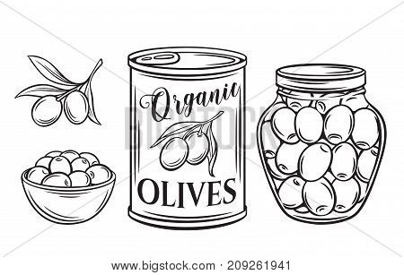 Canned olives in tin can and glass jar. Illustration outline food product in retro sketch style.