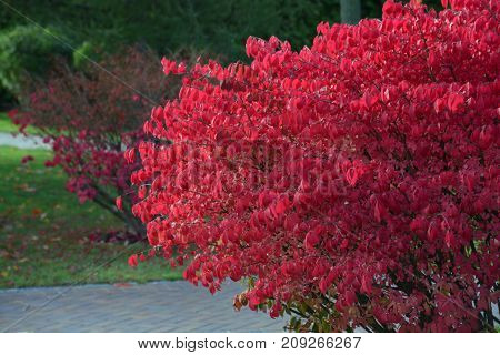 landscape design, autumn tree