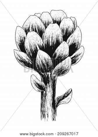 Artichoke flower. Fresh organic healthy food. Black Sketch vegetable isolated on white background. Design for health and beauty natural product. Hand drawn print. Vector engraving illustration.