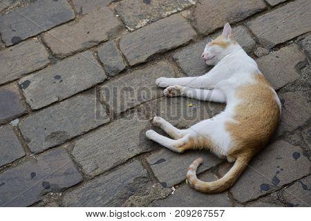 a cute cat sleeping on the floor
