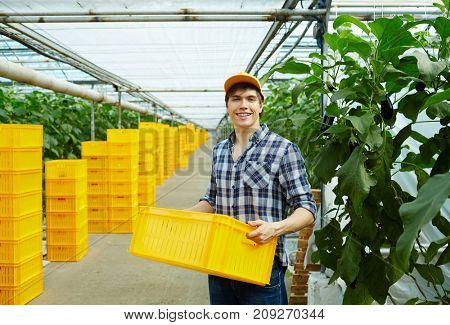 Happy greenhouse worker with plastic box standing in aisle between plantations