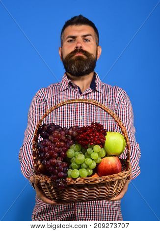 Man With Beard Holds Basket With Fruit On Blue Background