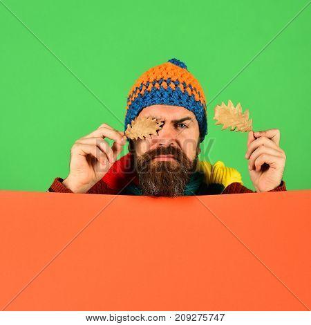 Man Holds Oak Tree Leaves On Green And Orange Background
