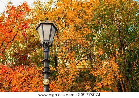 Autumn background. Metal lantern in the autumn park on the background of the autumn trees. Colorful autumn park scene with lantern against autumn leaves. Autumn background. Colorful autumn nature view of autumn park