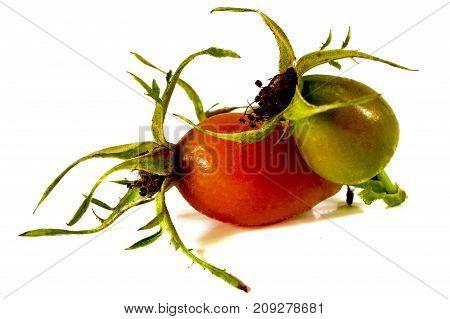 Dog rose fruit isolated on white background.