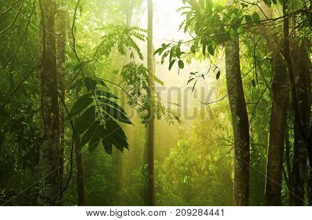 Tropical rain forest with morning sunlight shine through the dense, Malaysia